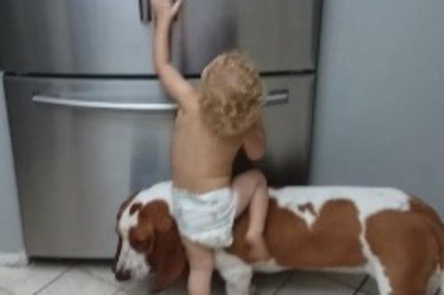 Dečak i pas ujedinili snage: Roditelji šokirani onim što su uradili! (VIDEO)