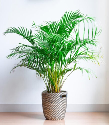 5 sobnih biljaka koje leče nesanicu: Držite ih u spavaćoj sobi! (FOTO)