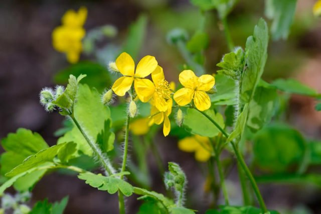 Biljka koju sa razlogom zovu Božji dar: Prirodni lek za mnoge bolesti! (RECEPT)
