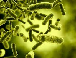 Liječenje bakterija prirodnim putem
