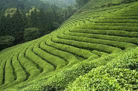 Čaj koji svi preporučuju može da škodi? Ne preterujte, jer jedan organ može ozbiljno da propati!
