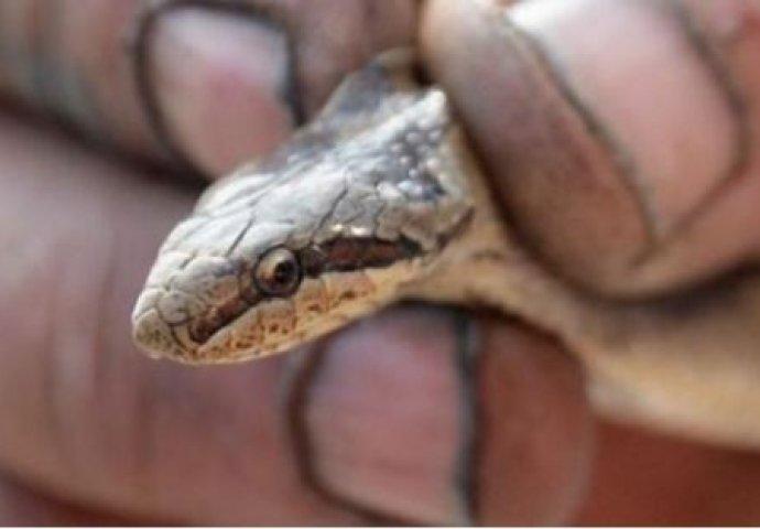 SAMO JEDNA STVAR U DVORIŠTU JE OVOM ČOVJEKU NAPRAVILA PAKAO OD ŽIVOTA: Zbog ovoga mu se u kući nastanilo leglo zmija!