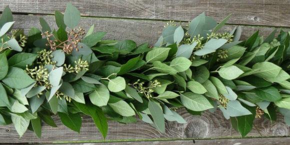 Eukaliptus – ljekovitost, eterično ulje i čaj