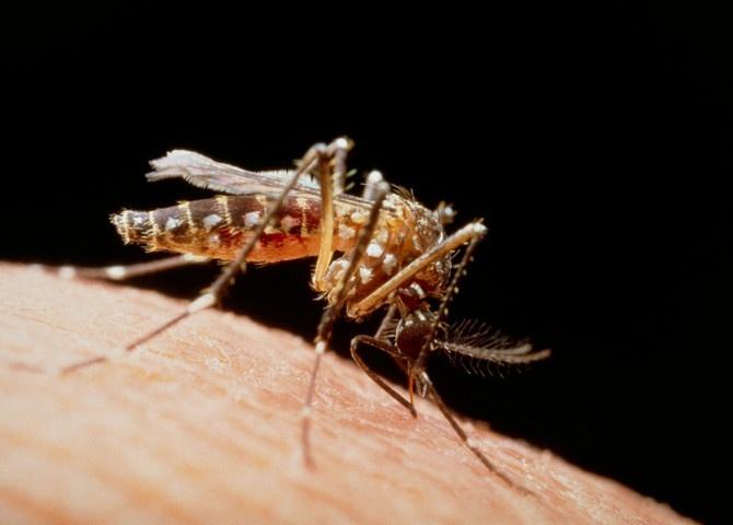 Ujeo vas je komarac? Ako je bio SITAN i posle njega NEMA OTOKA, a imate ove simptome, hitno se javite lekaru!