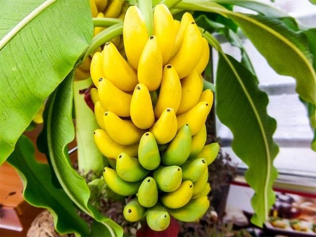 JEDAN DEO BANANE ČESTO ZANEMARUJEMO: Većina pravi STRAVIČNU GREŠKU kada ljušti ovo voće!