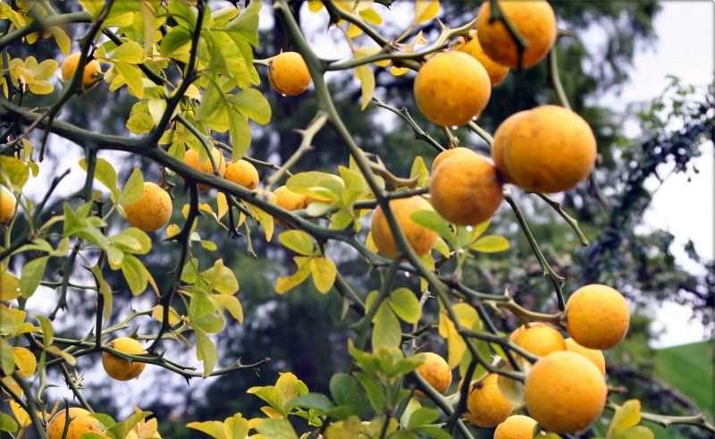 C vitamin je najbolji lijek protiv prehlade. Prilažemo vam recept kako da sami sebi napravite lijek na bazi prirodnog C vitamina.