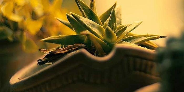 Kućne biljke koje pročišćavaju vazduh